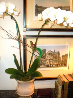 Need an Elegant Gift Idea?  An Orchid is Perfect.
