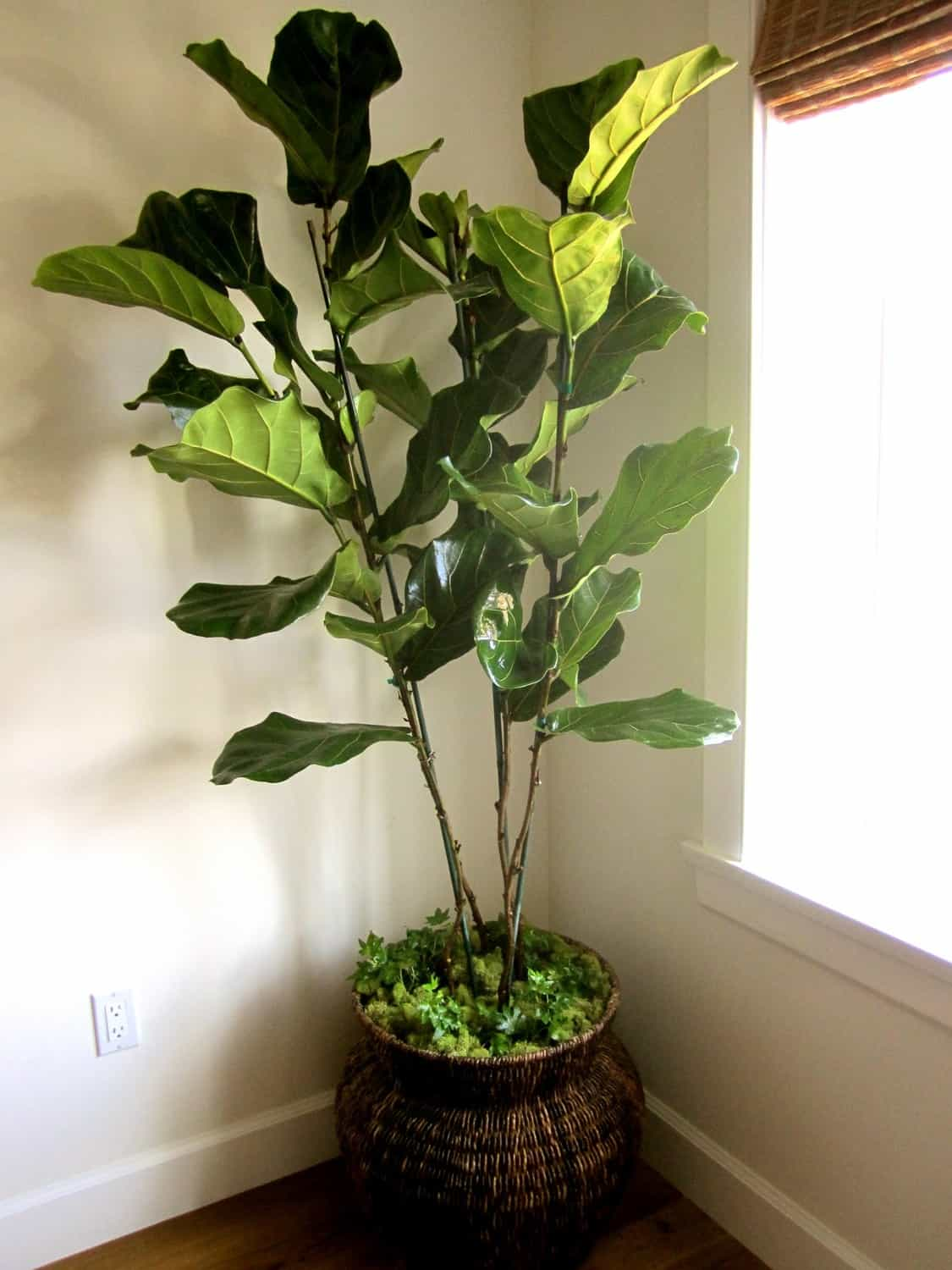 real vs artificial house plants - classic casual home