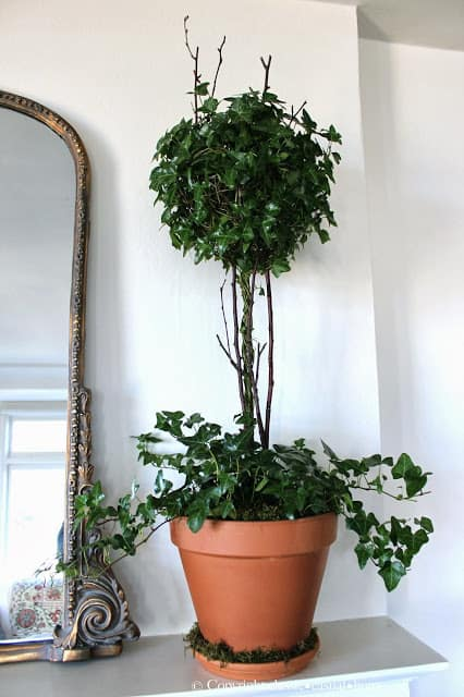 Fresh Plants to Replace Your Holiday Décor