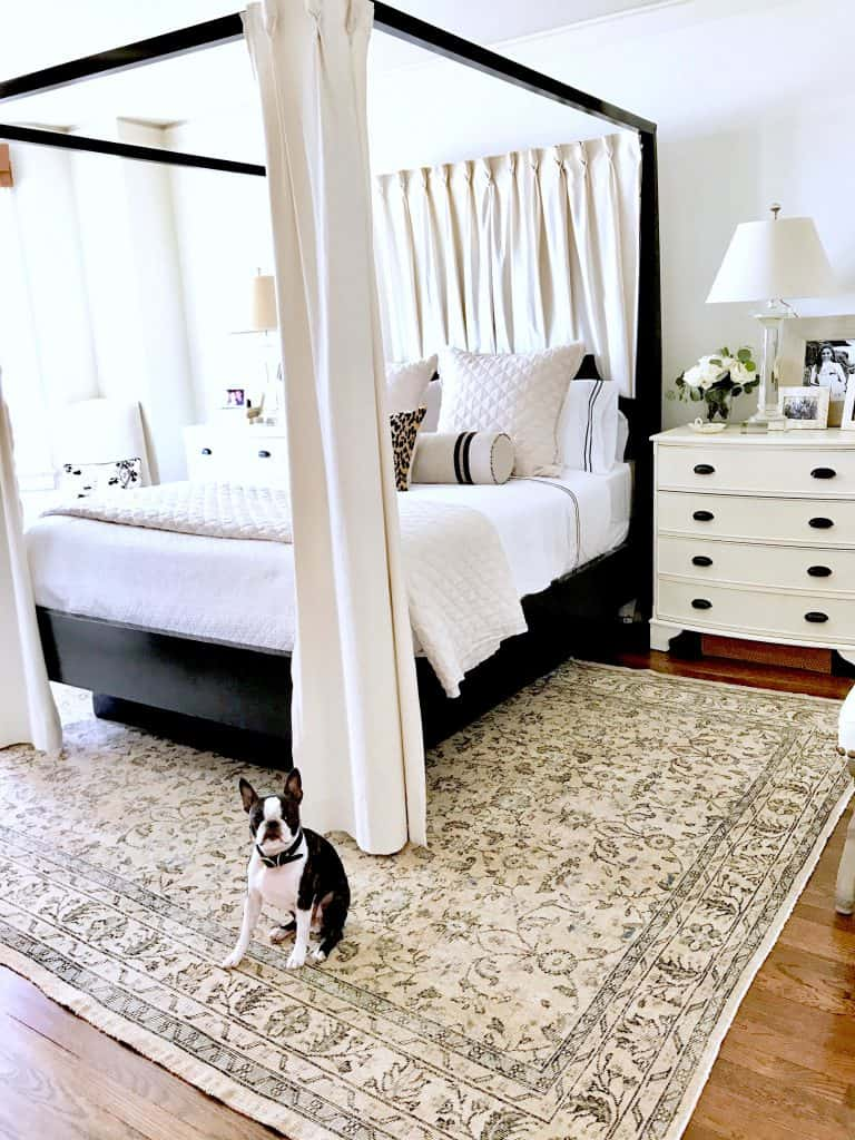 Beautiful traditional decor in black and white bedroom with Boston Terrier