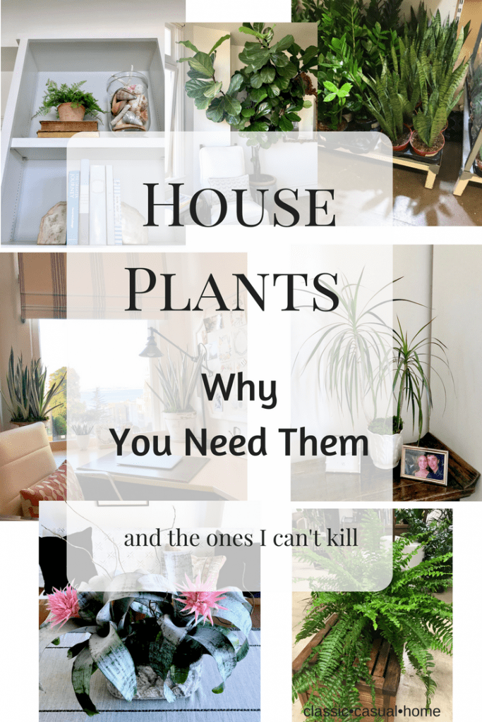 House plants what survives and why you need them now for Classic house plants
