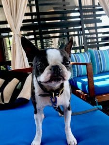 The Cape Hotel is dog friendly, Cabo San Lucas