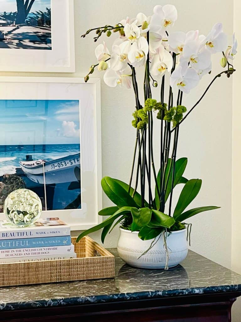 Orchid as an easy care house plant