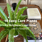 10 EASY Plants To Brighten Your Home